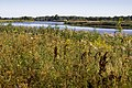 Pilssalas palienu pļavas - meadows - panoramio.jpg