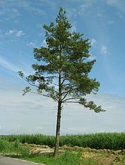Купить искусственные елки елка сосна с доставкой
