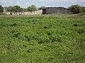 Pliska Fortress 031.jpg