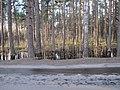 Pludi druvciema 2011 - panoramio (79).jpg