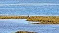 Point Prim Coast, Point Prim (470964) (13487868535).jpg