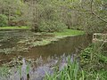 Pond by River Lyd - geograph.org.uk - 417208.jpg