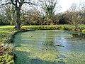 Pond in Boies Meadow - geograph.org.uk - 1165103.jpg