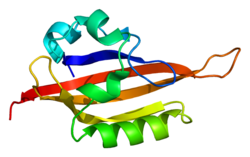 Protein EPAS1 PDB 1p97.png