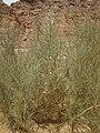 Qesm Saint Katrin, South Sinai Governorate, Egypt - panoramio (10).jpg