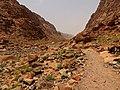 Qesm Saint Katrin, South Sinai Governorate, Egypt - panoramio (14).jpg