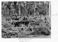 Queensland State Archives 4305 Bulldozer clearing at the Childers Soldiers Settlement 1950.png