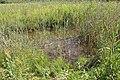 Réserve naturelle Marais Lavours Aignoz Ceyzérieu 64.jpg