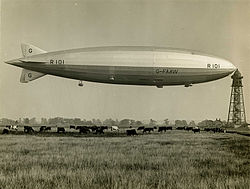 R101 and cows.jpg