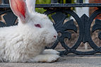 Rabbit resting.jpg