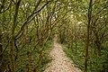 Rabenhain Spiekeroog - Nationalpark Niedersächsisches Wattenmeer.jpg