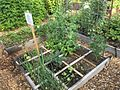 Raised bed (30827889786).jpg