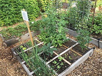 Ultisol - A garden planted in a raised bed