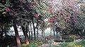 Rajghat Garden.jpg