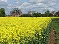Rapeseed field near Routh - geograph.org.uk - 786711.jpg