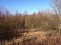 Rashielee Plantation - geograph.org.uk - 1733924.jpg