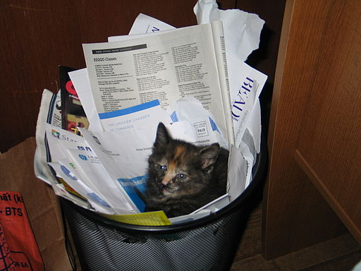 Recycled kitten