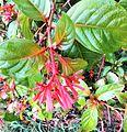 Red flower image 5.jpg
