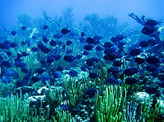 Reef1725 - Flickr - NOAA Photo Library.jpg
