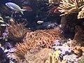 Reef tank at Shedd Aquarium.jpg