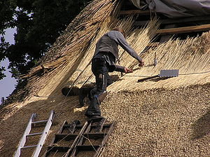 Reed (plant) - A man in Germany thatching a roof using reeds