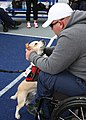 Retired U.S. Navy Master-at-Arms Seaman Steve Hancock, right, pets his service dog after practicing the discus throw in preparation for the 2013 Warrior Games May 9, 2013, in Colorado Springs, Colo 130509-N-DT940-182.jpg