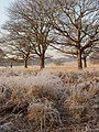 Richmond Park with hoar frost - geograph.org.uk - 1102732.jpg