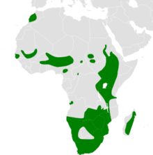 Riparia paludicola distribution map.png
