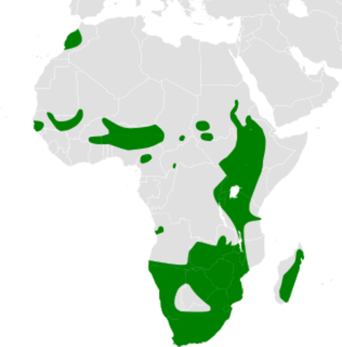 Riparia paludicola distribution map