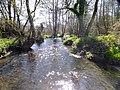 River Hooke, Kingcombe Meadows, DWT geograph - 3515602.jpg