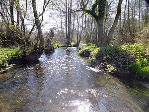 River Hooke - River Hooke at Kingcombe Meadows