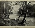 River birches at sutton, w. virginia millspaugh flora of west virginia 1896.jpg
