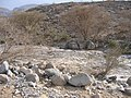 Riverbed in Wadi al Khaynagh (10 of 10).JPG