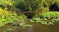 Rives de la riviere Tomifobia - panoramio.jpg