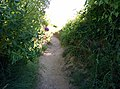Rock-cornwall-england-tobefree-20150715-165313.jpg