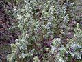 Rzav-Dobrun detalji iz Parka prirode 04.jpg