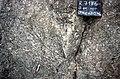 S of Mt Jackson granite gneiss breccia.jpg