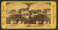 Salem, Mass.--grotto at the willows, from Robert N. Dennis collection of stereoscopic views.png