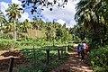 Samaná Province, Dominican Republic - panoramio (57).jpg