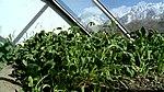 Satpara Irrigation Project (16294200997).jpg