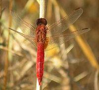 Aammiq Wetland Wikipedia