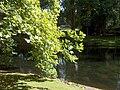 Schaerbeek Parc Josaphat Tulipier 001.jpg