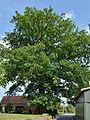 Schleswig-Holstein, Fitzbek, Naturdenkmal NIK 6919.JPG