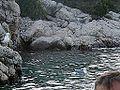 Sea-gull ( Tunera) Supetarska Draga - panoramio.jpg