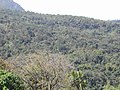 Secondary tropical forest along a ravine and slopes south of Same, Jul 2003.jpg