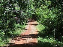 La selva misionera, en la provincia de Misiones.