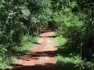 Forestry in Argentina - A path in a jungle in Misiones with its characteristic red soil