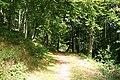 Selworthy, in Selworthy Woods - geograph.org.uk - 547718.jpg