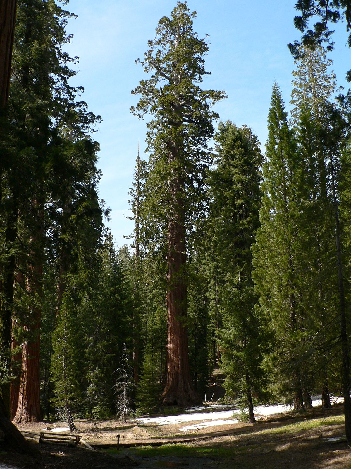 List Of Giant Sequoia Groves Wikipedia