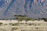 Shaba Kenya below the mountains.jpg
